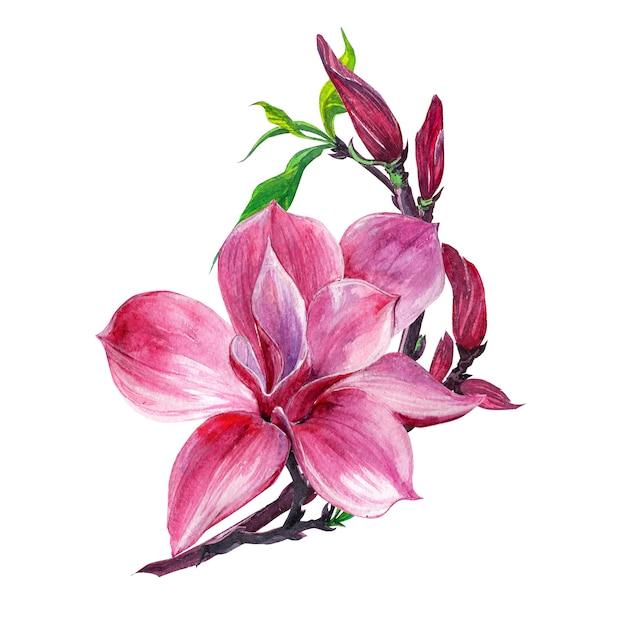 Flower arrangement, floral wreath with magnolia flowers, isolated Premium Photo