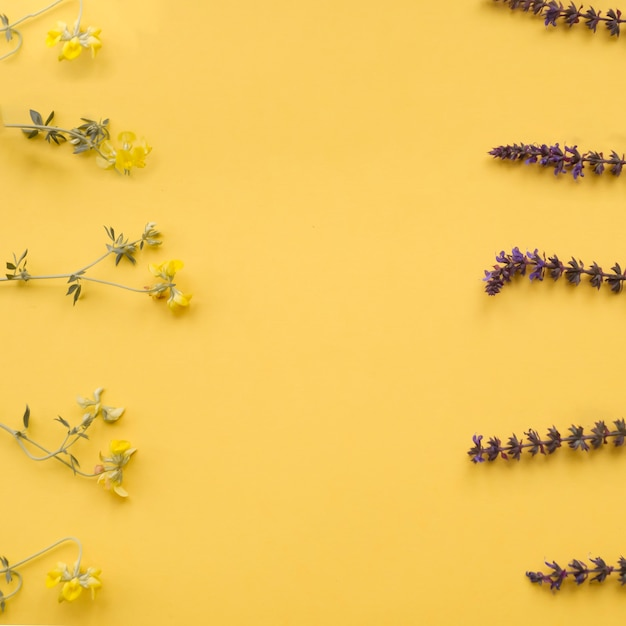 Flower borders on yellow background Free Photo
