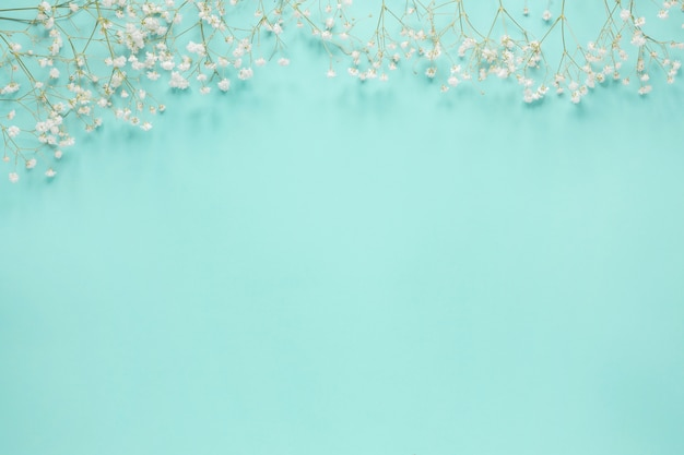 Flower branches scattered on blue table Free Photo