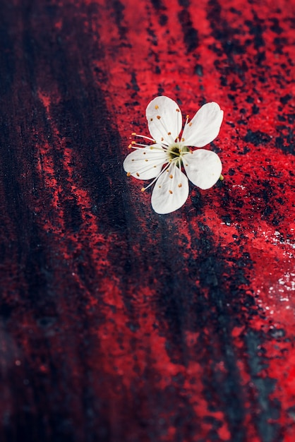 Flower of cherry tree Premium Photo
