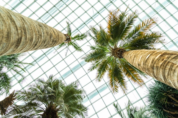 Flower dome garden and greenhouse forest for travel Free Photo