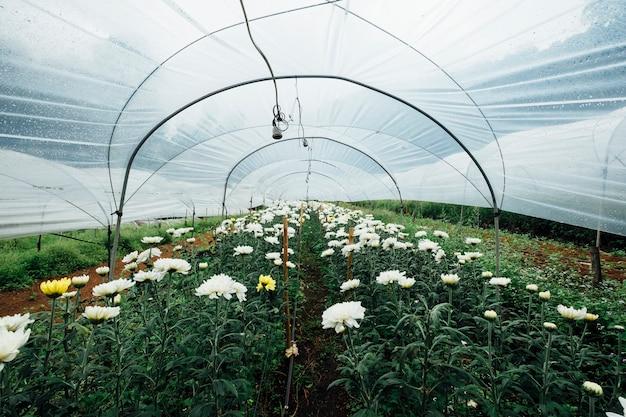 Flower field in glasshouse Free Photo