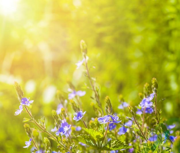 空の花畑。自然の要約 Premium写真