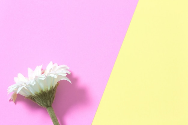 Flower flat lay on pastel background with copy space. soft effect filter. minimal concept. Premium Photo