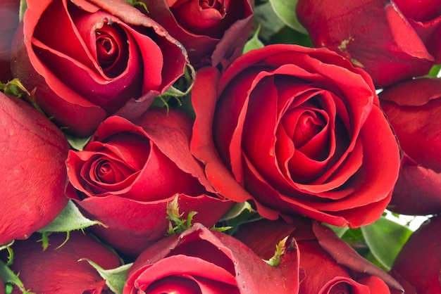 flower love textures beatiful bloom photo  free download, Beautiful flower