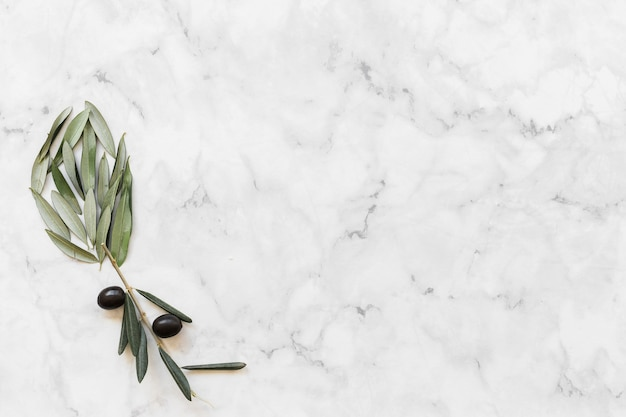 Flower made with olive and leaves on white marble backdrop Free Photo