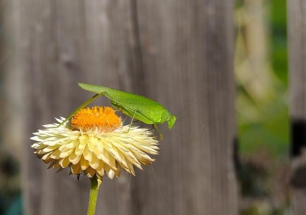 Цветок растение природа макро кузнечик Бесплатные Фотографии