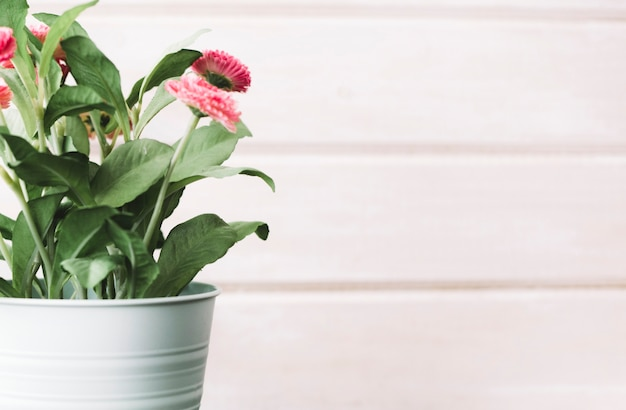 Flower pot in front of wooden background Free Photo