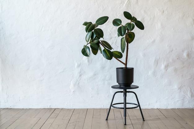 白いレンガ壁の背景、コピースペースで床に立っているイチジクの木と植木鉢 Premium写真