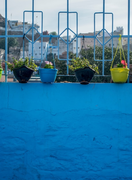 Flower pots on blue wall Free Photo