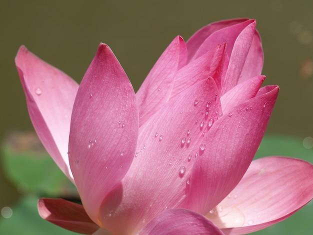 Flower of rose petals Free Photo