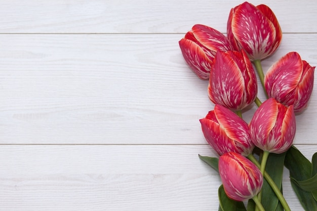 Flower tulips. bouquet of five yellow red striped tulips on a white wooden floor. Premium Photo