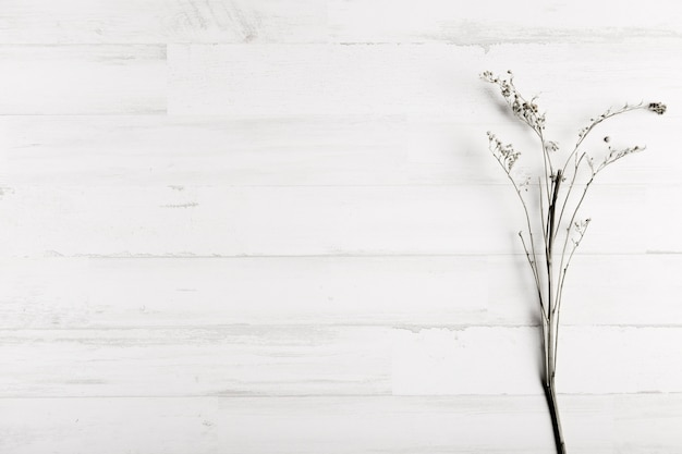 Flower on white wooden wall background Free Photo