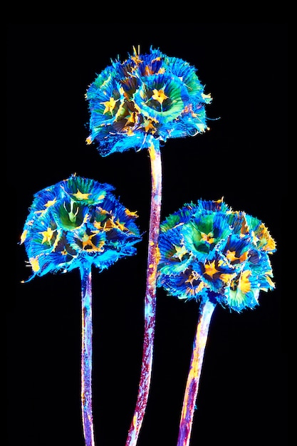 Flower with neon glow on a black background. Premium Photo