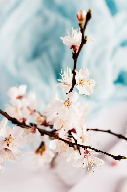 Flowering branch of wild apricot tree spring flowers in vase Free Photo