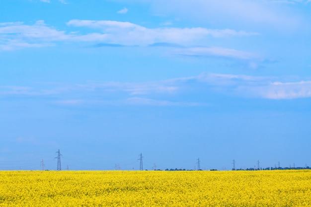 Flowering field, far away see the power line Premium Photo