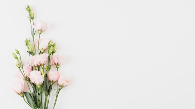 Flowers background copy space Free Photo