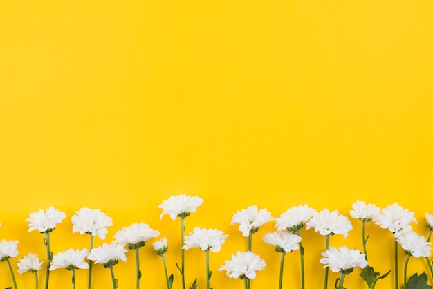 Flowers background copy space Premium Photo