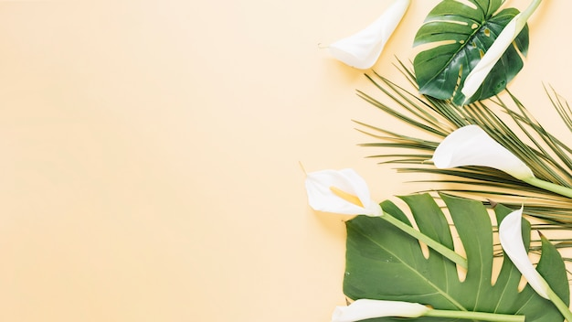 Flowers background Free Photo