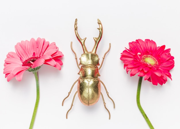 Flowers and beetle Free Photo