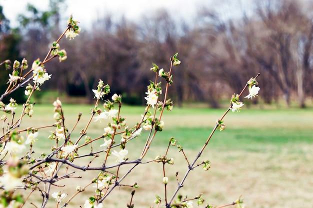 Flowers bloom on the trees Premium Photo
