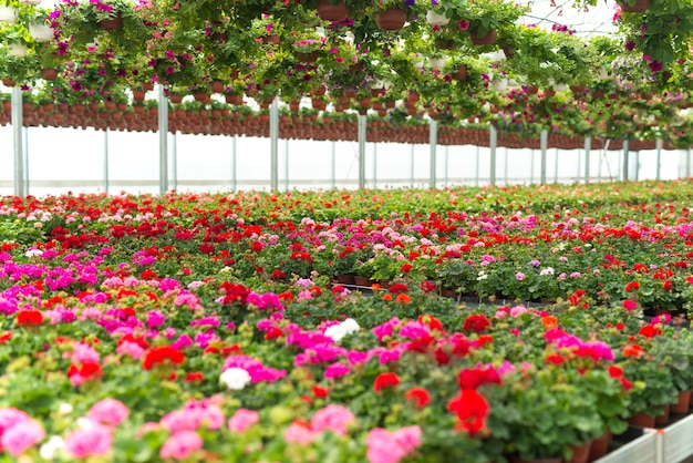 Flowers blossoming in plant greenhouse Free Photo