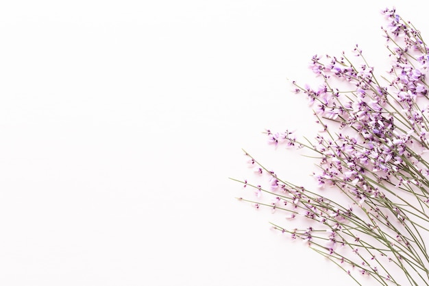 花の構成ピンクの花の上面図 Premium写真