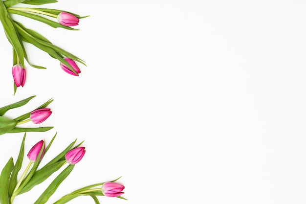 Flowers composition. tulip flowers on white background. spring concept. flat lay, top view, copy space Premium Photo