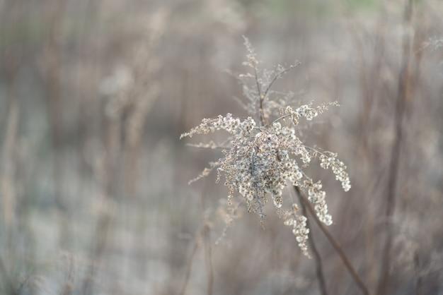 花、枯れた、木、春、自然、背景 Premium写真