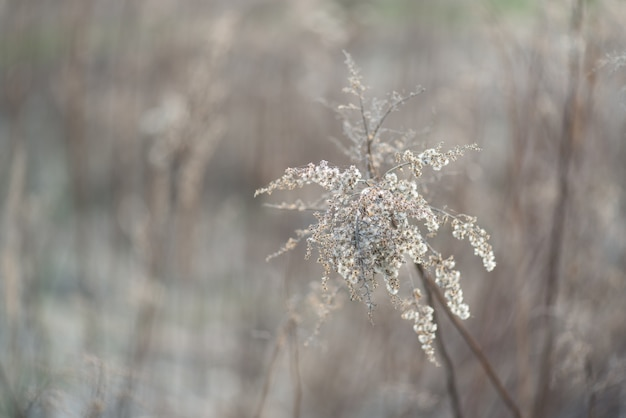 Flowers grass dead wood in the spring natural background Premium Photo