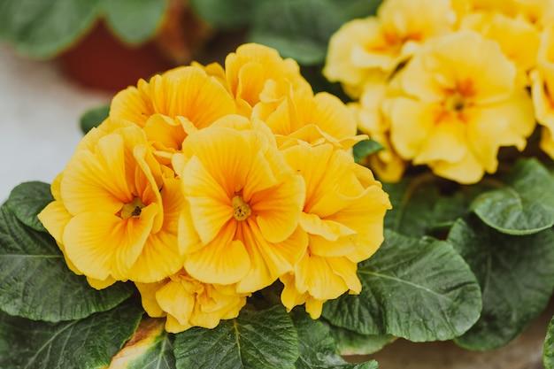 温室の花 Premium写真
