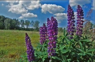 Flowers, landscape Free Photo