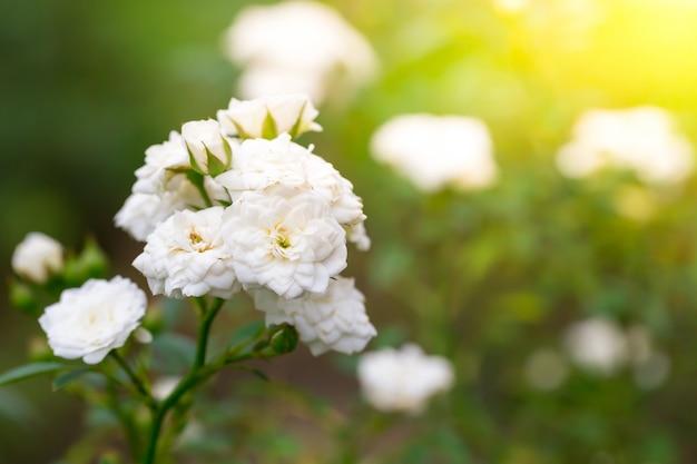 Flowers in nature. Premium Photo