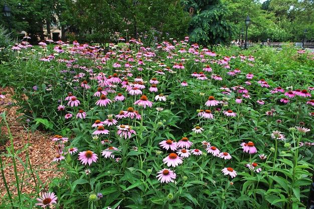 Flowers in new york city Premium Photo