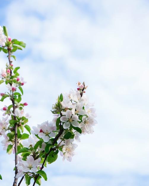 Цветы на голубом небе Бесплатные Фотографии