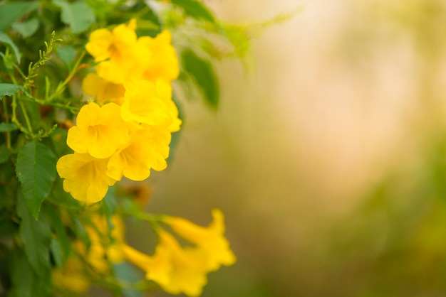 Flowers on a toned on gentle soft green and warm background outdoors close-up macro Premium Photo