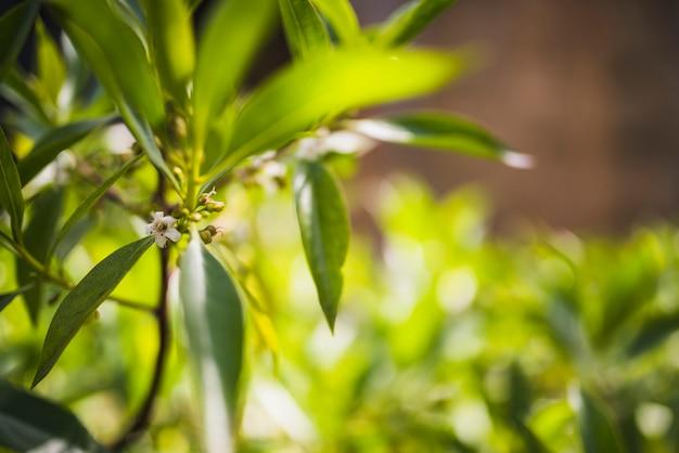 Flowers on tree branch in sunlight Free Photo