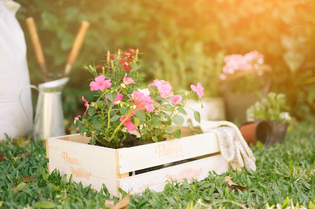 Flowers in wooden box on meadow Free Photo