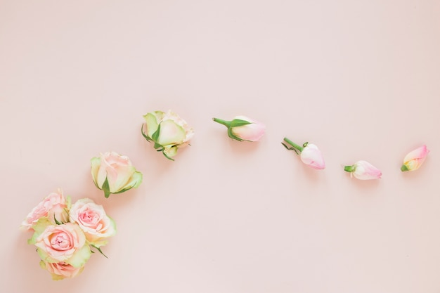 Flowers Free Photo