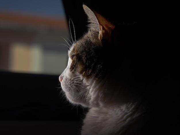 緑の目を持つふわふわ猫 無料写真