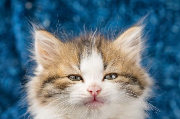 Fluffy kitten cute portrait Premium Photo