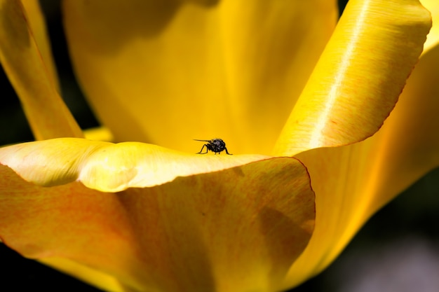 Fly sitting on the yellow petals of a flower Free Photo