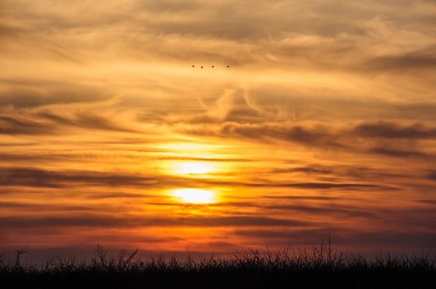 Flying birds on dramatic sunset background Premium Photo