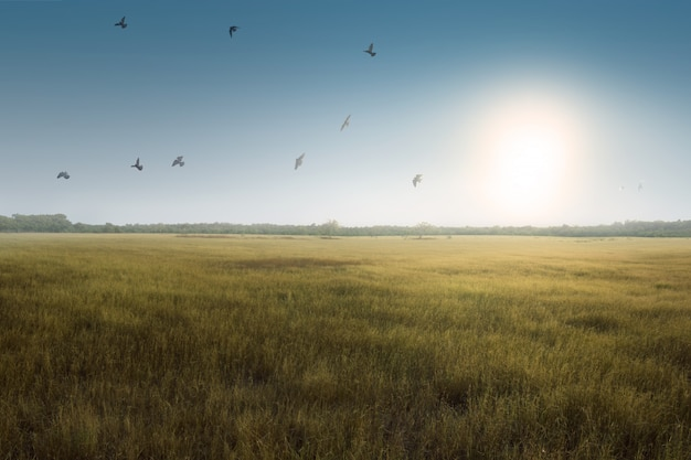 Flying birds above green grass field Premium Photo