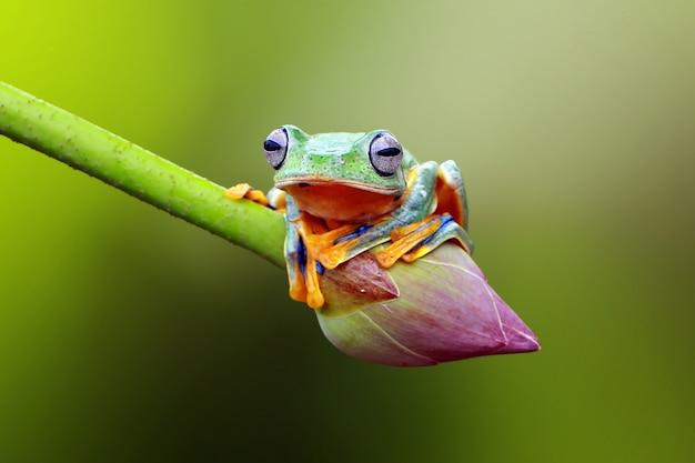Flying frog on the lotus flower Premium Photo