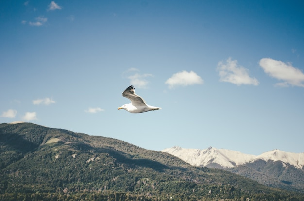 A flying seagull and the hills Free Photo