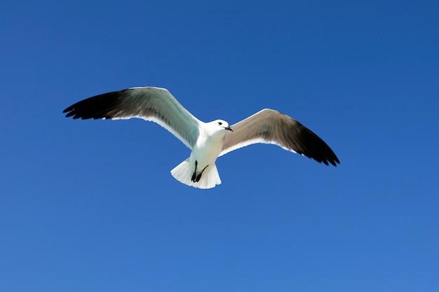 夏の青空に飛ぶカモメ 無料写真