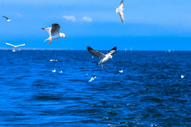 Flying seagulls in blue sky and tropical sea Premium Photo