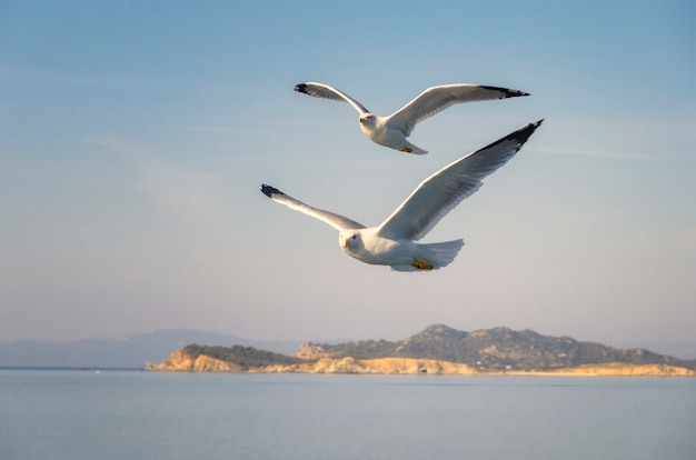 Flying seagulls over the sea Premium Photo