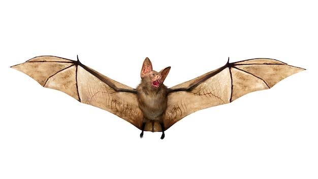 Flying vampire bat isolated for halloween decoration, 3d rendering Premium Photo